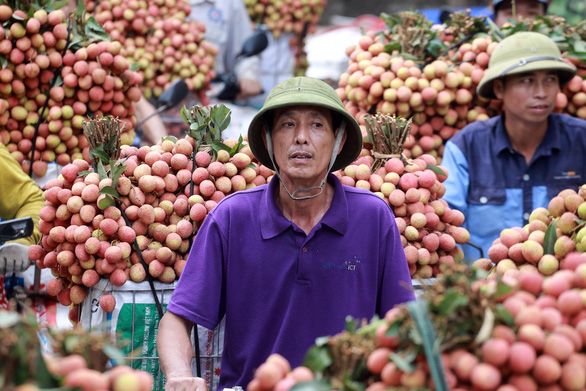 Toàn bộ thương nhân Trung Quốc phải cách ly khi sang Việt Nam mua vải thiều Lục Ngạn - Ảnh 1.