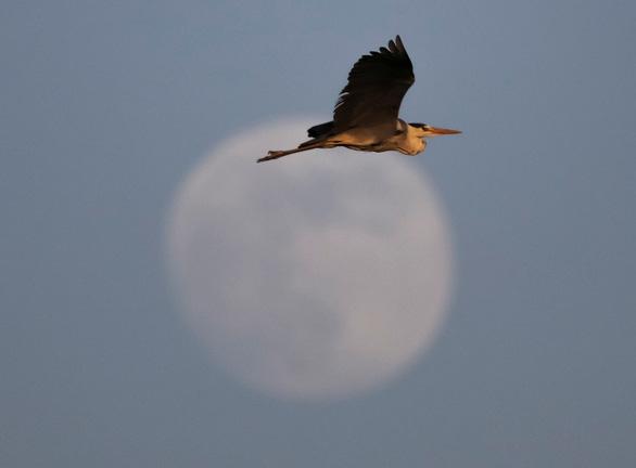 Ngắm trăng chuyển màu hồng trong đêm nguyệt thực - Ảnh 3.