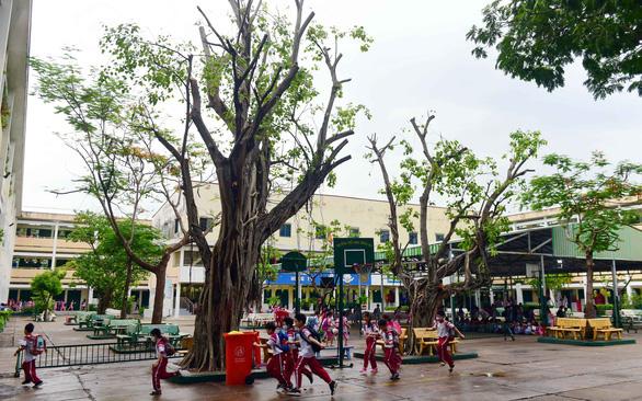Khảo sát 21 trường học tại TP.HCM: cây xanh cắt tỉa chưa đúng kỹ thuật - Ảnh 1.