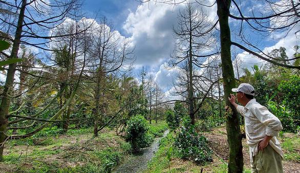 Nhà vườn lao đao vượt  khó - Kỳ 1: Ngập nỗi lo ở thủ phủ trái cây - Ảnh 1.