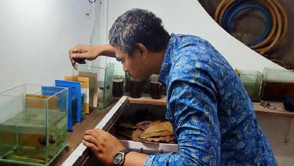 Nuôi cá nở rộ vì giãn cách xã hội ở Indonesia - Ảnh 1.