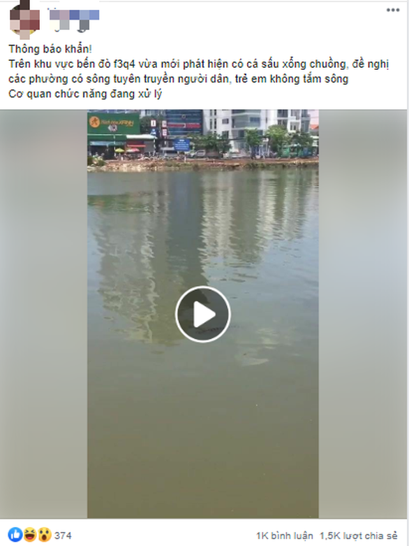 Chú cá sấu nhí 4kg trên đoạn kênh Tẻ ở phường 3, quận 4 đã bị mời vô trại - Ảnh 3.