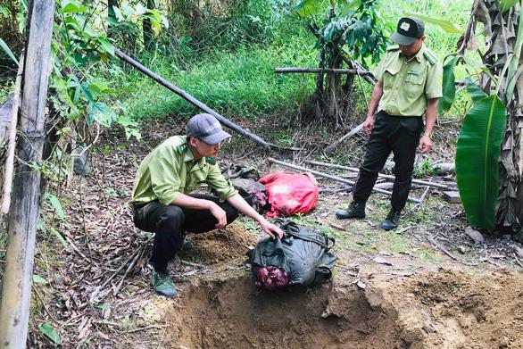 Bò tót 200kg bị lâm tặc hạ sát trong Vườn quốc gia Cát Tiên - Ảnh 2.