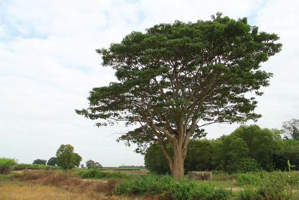 Thăm làng quê Bao La, ngắm cây ngô đồng cô đơn trong Mắt biếc - Ảnh 1.