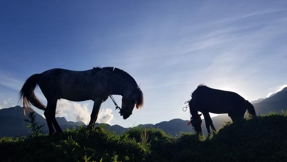 Rủ nhau lên Sa Pa 'ướp lạnh' mùa hè, xem Vó ngựa trên mây - Ảnh 6.
