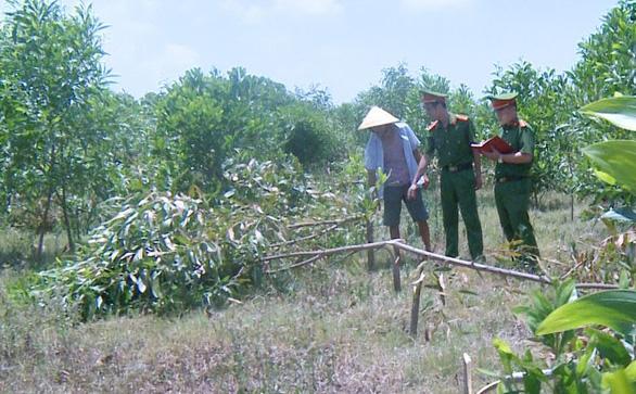 Tạm giữ 3 nghi phạm chặt hơn 700 cây keo vì không được chăn thả bò - Ảnh 1.