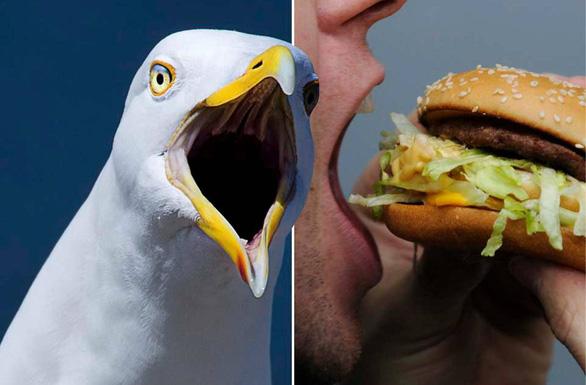 Người đàn ông cắn chim hải âu vì bị cướp bánh McDonald - Ảnh 1.