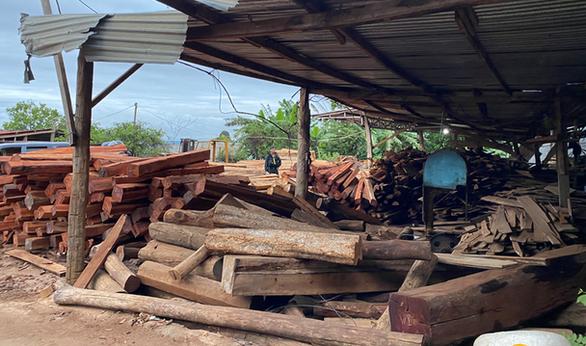 Tạm giam chủ công ty chế biến gỗ chứa gần 200m3 gỗ lậu - Ảnh 1.