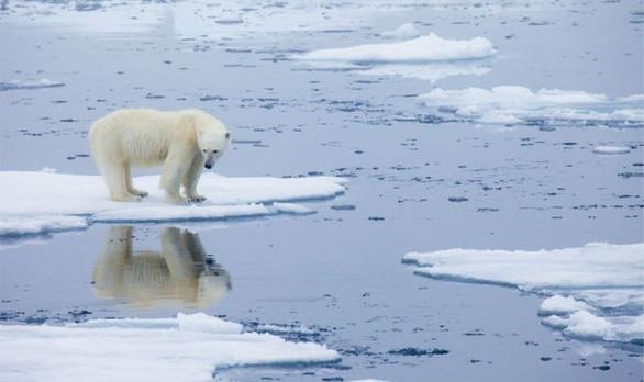 Gấu Bắc Cực sắp biến mất vĩnh viễn khỏi Trái đất - Ảnh 2.