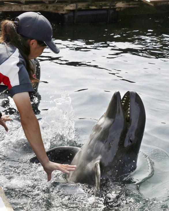 Cá hiếm lai giữa cá voi và cá heo - Ảnh 2.