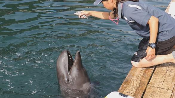 Cá hiếm lai giữa cá voi và cá heo - Ảnh 1.