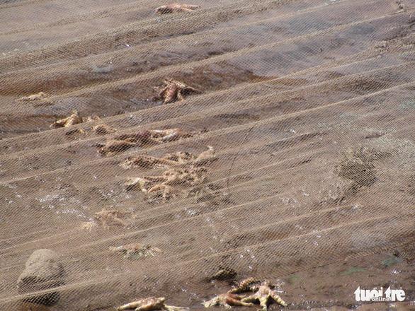 Chân gà thối nổi lềnh bềnh trên tuyến sông cấp nước cho các nhà máy nước Hải Phòng - Ảnh 3.