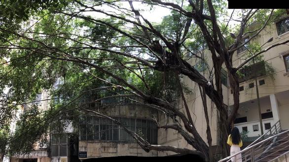 Đây thật sự là một cây di sản, phải bảo tồn - Ảnh 1.