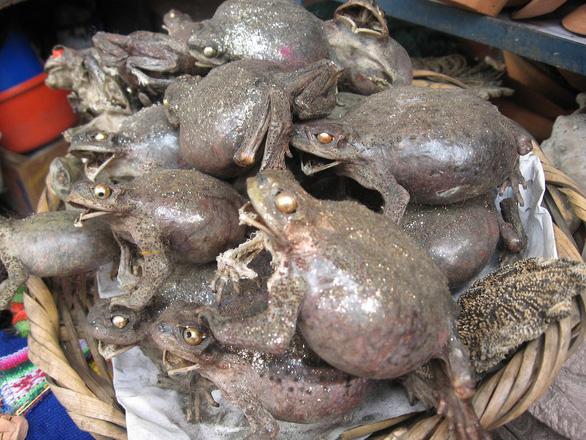 Đi chợ chuyên doanh bùa: xác cóc ếch khô, nhau thai khô, công thức kích thích... - Ảnh 1.