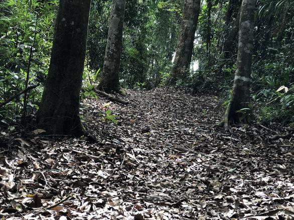 Ngắm thần mộc sa mu ngàn năm tuổi trong rừng nguyên sinh - Ảnh 8.