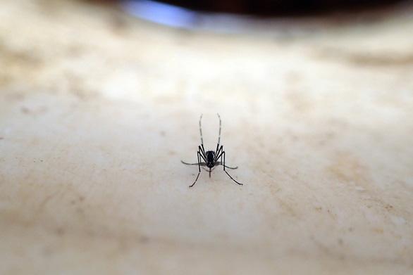 Muỗi thích hút máu người là tại... người? - Ảnh 1.