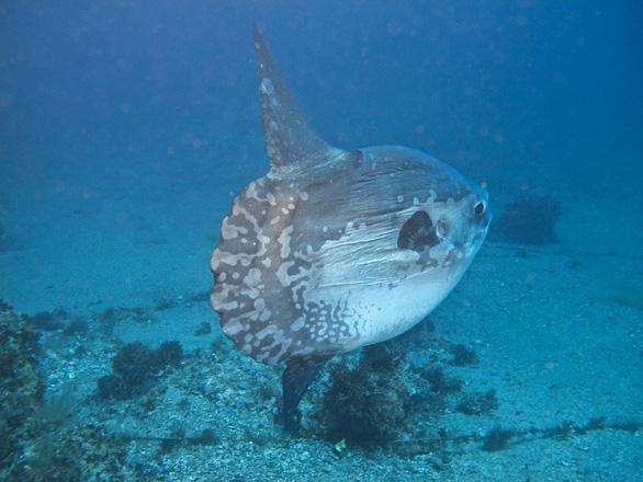 Loài cá lười biếng nhất - Ảnh 1.