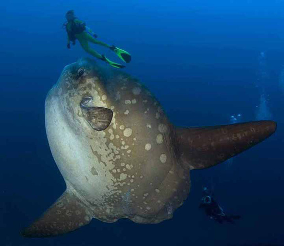Loài cá lười biếng nhất - Ảnh 3.