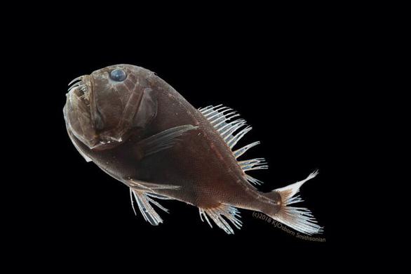 Bí ẩn dưới lớp da giúp cá ẩn mình dưới biển sâu - Ảnh 3.
