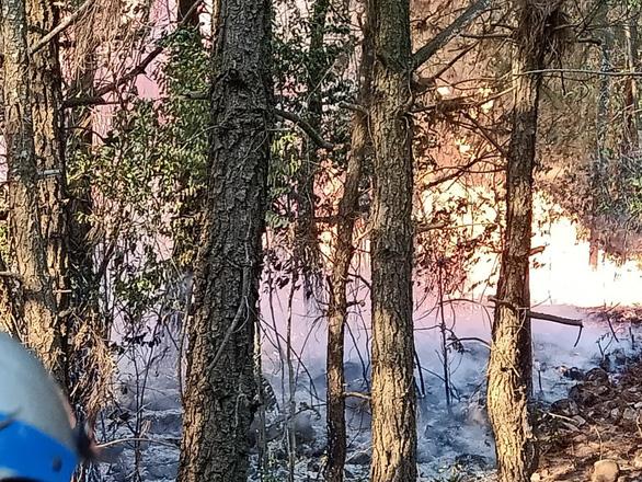 Hàng trăm người suốt đêm dập tắt rừng thông cháy - Ảnh 3.