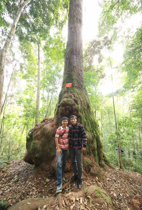 Băng qua cung đường muối Tây Giang ngắm cây pơ mu canh cửa núi rừng - Ảnh 4.