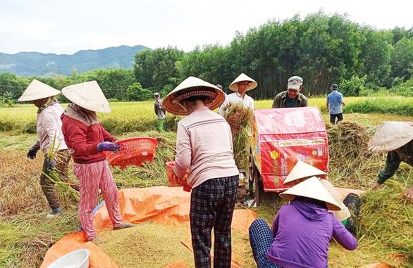 Xúc động cảnh hàng xóm chung tay gặt lúa giúp gia đình bị cách ly tập trung - Ảnh 2.
