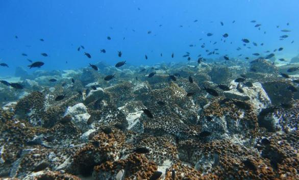 Hệ sinh thái đại dương đang bên bờ vực sụp đổ do nước biển ấm lên - Ảnh 1.