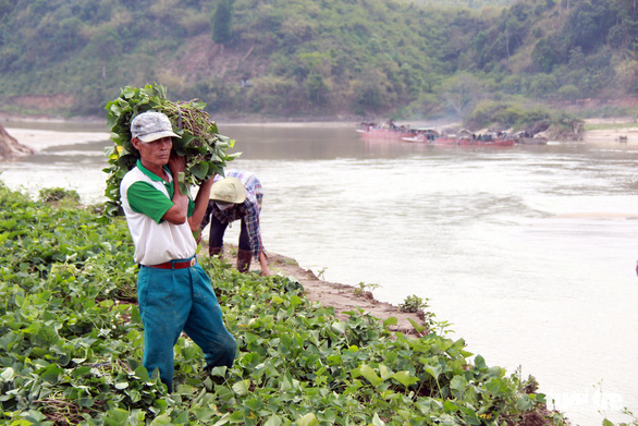 Thêm 40 tỉ đồng vá sông Krông Nô đang sạt lở trầm trọng - Ảnh 2.