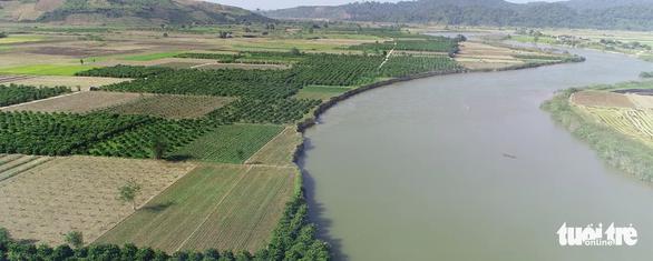 Thêm 40 tỉ đồng vá sông Krông Nô đang sạt lở trầm trọng - Ảnh 1.