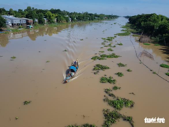 Mực nước các sông ĐBSCL đang lên, đỉnh lũ có thể cuối tháng 9 - Ảnh 1.