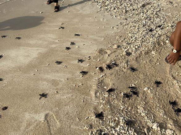 45 rùa con quý hiếm và 51 ngày cưu mang của dân đảo Phú Quý - Ảnh 3.