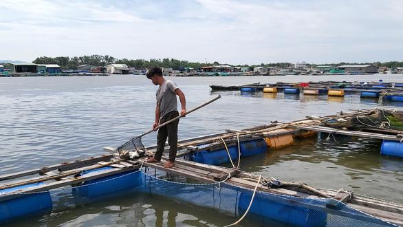 Cá bè Long Sơn chết lai rai chưa rõ nguyên nhân, người nuôi thiệt hại tiền tỉ - Ảnh 2.