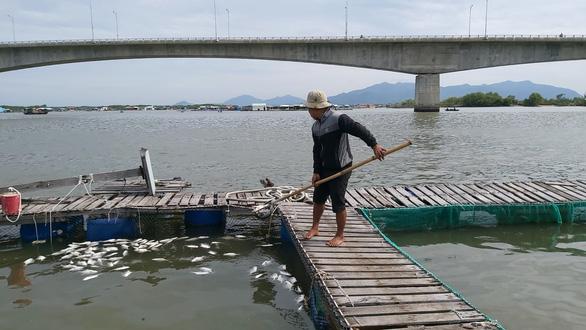 Cá bè Long Sơn chết lai rai chưa rõ nguyên nhân, người nuôi thiệt hại tiền tỉ - Ảnh 1.