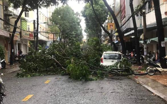 Cần Thơ: Mưa kèm gió mạnh làm nhiều cây xanh ngã đổ - Ảnh 1.