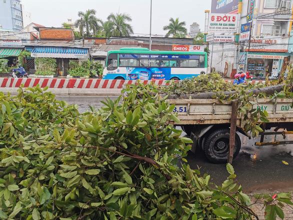 Cần Thơ: Mưa kèm gió mạnh làm nhiều cây xanh ngã đổ - Ảnh 2.