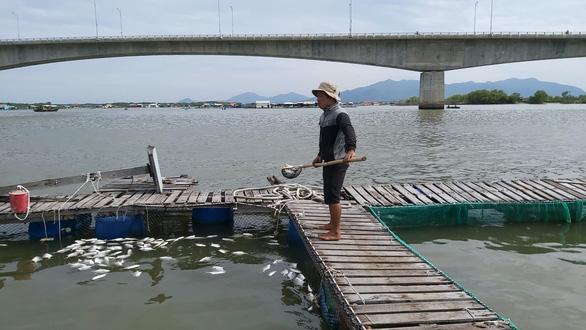Cá bè Long Sơn chết lai rai do ký sinh trùng quả dưa - Ảnh 1.
