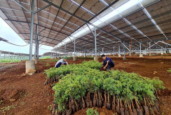 Lúng túng với điện mặt trời nông nghiệp - Ảnh 1.