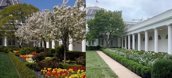 Vườn hồng Nhà Trắng của bà Melania Trump bị chê buồn chán - Ảnh 2.