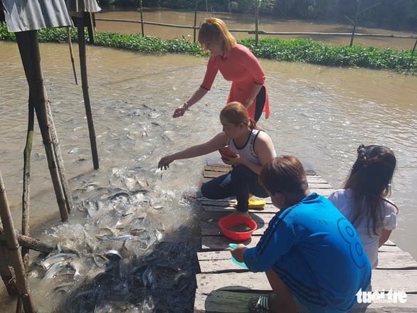 Chi tiền triệu nuôi đàn cá hàng ngàn con kéo đến sống trên kênh Thần Nông - Ảnh 4.