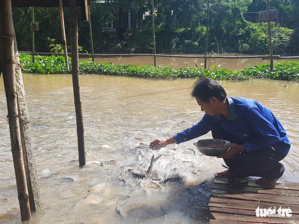 Chi tiền triệu nuôi đàn cá hàng ngàn con kéo đến sống trên kênh Thần Nông - Ảnh 3.