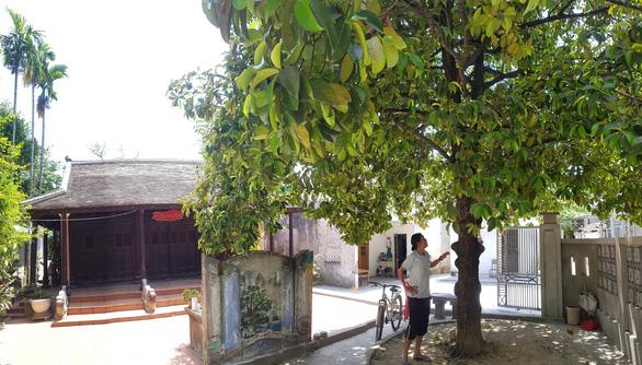 Chuyện chưa kể về cây trái cố đô Huế - Kỳ 3: Giáng châu Gia Định - Ảnh 1.