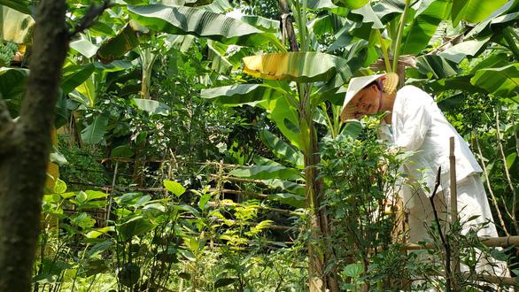 Chuyện chưa kể về cây trái cố đô Huế - Kỳ 4: Khu vườn huyền diệu - Ảnh 1.