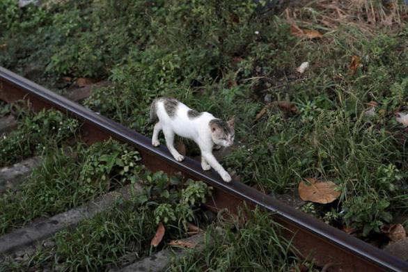 Bị bắt vì nghi buôn ma túy, chú mèo trốn khỏi nhà tù - Ảnh 1.