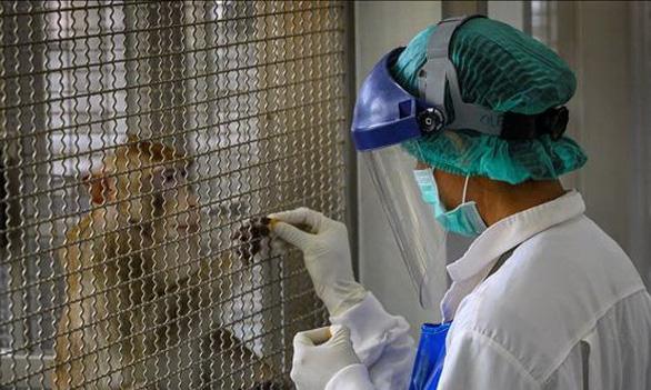 Thái Lan thử thành công vaccine ngừa COVID-19 trên khỉ, chuột - Ảnh 1.