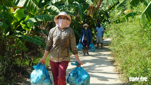 Bạn trẻ Đà Nẵng vào tận vườn giải cứu đu đủ Quảng Nam mắc kẹt vì dịch - Ảnh 3.