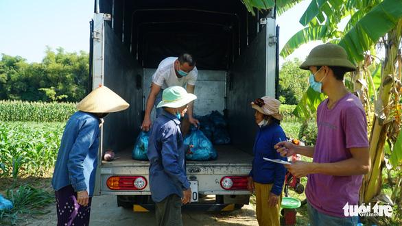 Bạn trẻ Đà Nẵng vào tận vườn giải cứu đu đủ Quảng Nam mắc kẹt vì dịch - Ảnh 4.
