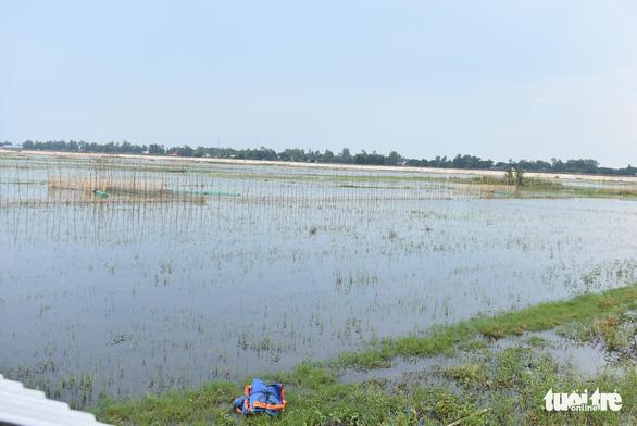 Nước lũ đã tràn đồng giáp biên giới Campuchia, chưa thấy cá tôm - Ảnh 4.