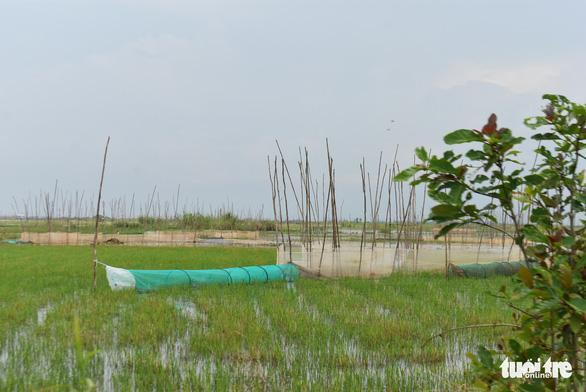 Nước lũ đã tràn đồng giáp biên giới Campuchia, chưa thấy cá tôm - Ảnh 6.