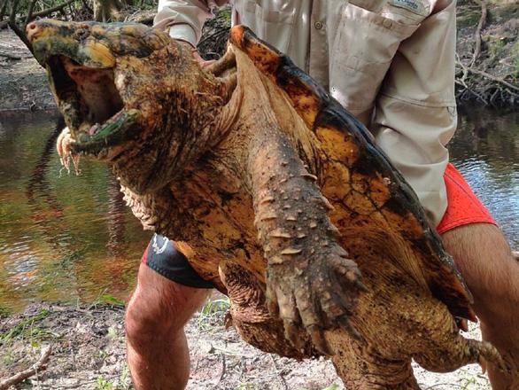 Bí ẩn loài rùa có cú cắn mạnh gấp 6 lần cá mập - Ảnh 4.