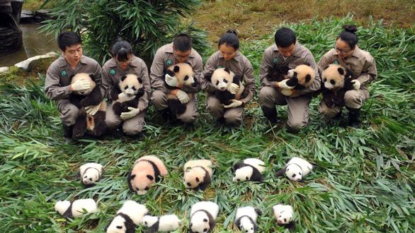 Lo cứu gấu trúc, Trung Quốc bỏ lơ loài khác - Ảnh 4.